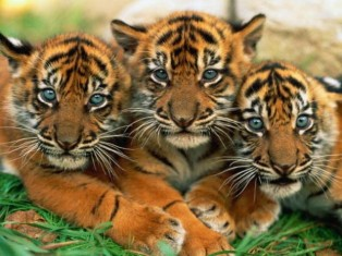 Triplets are triple the cute